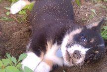 My Dream dog!! / by Ashley Harris
