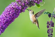 Hummingbird & Butterfly Cafe / by Janet Lane