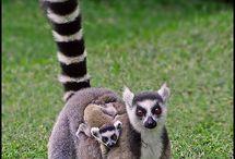 Lækre dyr / Dyre billeder af skønne dyr