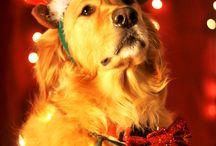 Christmas ☃️❄️❤️