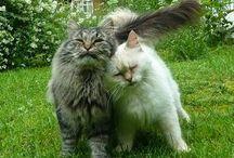one_bad_cat1