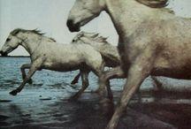 ..{All The Pretty Horses}..