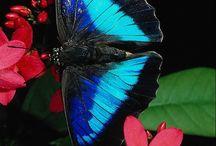 Flutterbies!!