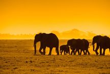 Kenya / A compilation of Kenya safari animals, parks and the people that make it possible!