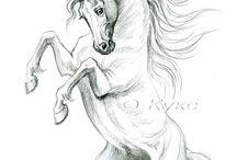 Paarde tekeningen