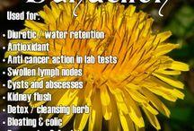 Health en beauty ecologic / Healty ecologic,  beauty, remedies,and more