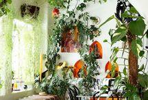 Home - Indoor Plants