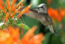 Can't Ping 'em, Air / Here we post pictures of the fantastic animals you will find in the air. We are all part of the Yard.