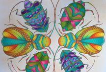 owady/motyle