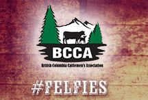 BCCA #CanadianBeef #Felfies / Love your food? Meet your  Canadian Beef farmers in British Columbia.