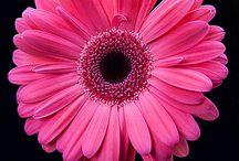 Online Florist InTrivandrum / Send flowers to trivandrum, flower delivery in trivandrum, best online florist in trivandrum, trivandrum online florist, cakes delivery in trivandrum, same day flower delivery in trivandrum, florist in trivandrum. http://www.onlineflowersgift.com/send-flowers/trivandrum
