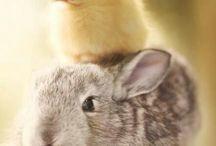 Bunny n Birdie