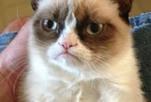 Grumpy Cat / My goal in life is to create my own viral grumpy cat meme.