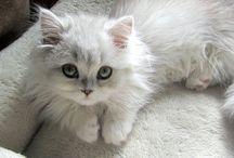 Smitten with Kittens / Kittens...just kittens.