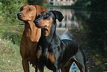 Dogs / by Francesca Montiel