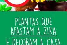 Plantas que Afastam a Zika