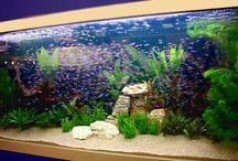 aquarium idea