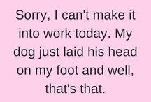 Veterinary Humor