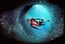 Scuba Dive / Scuba Dive