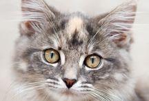 :-)Katzen