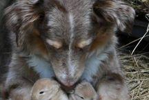 chienne et chiot