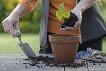 Genus Gardenwear Website and Products / Genus Gardenwear Website and Products.