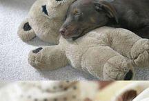 puppik