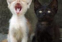 Cats <3