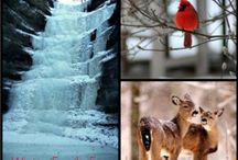 Winter Travels / by Dee Schwerin