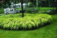 Cultivar Choices-Ornamental Grasses