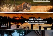 Botswana Safari / It comes as no surprise that Botswana has recently been voted by Lonely Planet as the top country to visit. But before you plan your next safari trip to Botswana, make sure to chose the best and affordable tour package which is offered by Safari Embassy in Botswana.