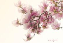 Light Summer odcienie bieli czy beżu ? / Odcienie bieli:  - jasna delikatna biel gardenii - tkaniny miękkie, lekkie z przeźroczystościami, - szyfon.  Odcienie kremowe: - tylko najjaśniejsze odcienie, - jasna kość słoniowa, - budyniowy jasny ecru, - tkaniny z lekkim połyskiem lub maty.  Odcienie beżu: - pastelowy odcień mangolii, - tkaniny: cienkie tafty z lekkim połyskiem. Koronki