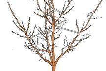 Garten Baumschnitt
