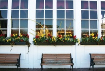 window boxes / by Lisa Griffey