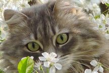 Domestic Cats, Outdoors