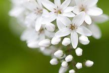 flowers wt