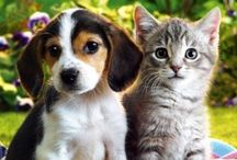 Keep Your Pet Healthy / Helpful information for pet parents.