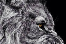 Leones y Lobos