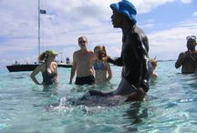 Stingray City - Grand Cayman / #StingrayCity#GrandCayman