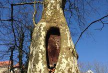 Natur meine Bilder- moje obrázky příroda / Natur