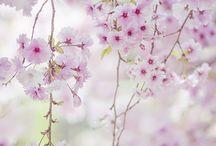 japon çiçeği