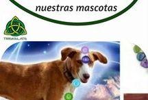 Terapias mascotas