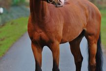 Άλογα που θα ήθελα να ιππεύσω