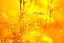 Kultaa ja hopeaa