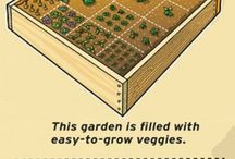 Growing the garden