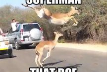 Hilarious Photos