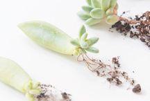 Byt - květiny a rostliny