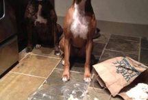 Dog shaming! Funny / by Nancy Farrow