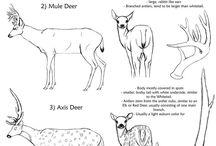 animal reference