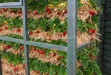 Garden/Sustainability